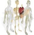 Anatomie člověka Miniland
